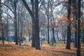 Картинка осень, деревья, парк, люди, дерево, улица, Пейзаж
