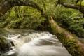 Картинка лес, деревья, река, Новая Зеландия, каскад, New Zealand, Catlins River