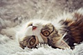 Картинка кошка, морда, лежит, боке, валяется