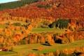 Картинка лес, горы, осень, склон, деревья
