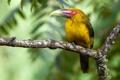 Картинка природа, птица, цвет, ветка, перья, клюв
