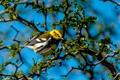Картинка небо, ветки, дерево, птица, перья, клюв