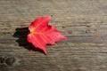 Картинка листья, макро, фон, обои, листик, wallpaper, форма