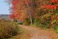 Картинка дорога, осень, небо, деревья