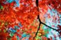 Картинка осень, листья, цвета, ветки, красные