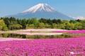 Картинка лес, цветы, гора, Япония, Фудзи, photographer, Kenji Yamamura