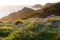 Картинка море, пейзаж, цветы