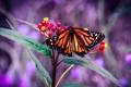 Картинка листья, цветы, бабочка