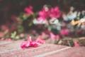Картинка розовый, лепесток, цветы