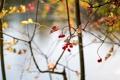 Картинка abstract, autumn, berries