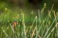 Картинка зелень, трава, птица, яркая