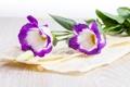 Картинка цветы, фиолетовые, сиреневые цветы