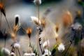 Картинка поле, цветы, природа, растения, стебель
