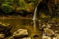 Картинка лес, деревья, камни, водопад, мох, кусты