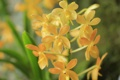 Картинка цветы, природа, растение, лепестки, соцветие