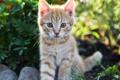 Картинка кошка, кот, солнце, котенок, рыжий