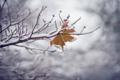 Картинка холод, зима, макро, снег, лист, цвет, лёд