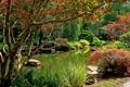 Картинка США, камни, пруд, ветки, Ball Ground Gibbs Gardens, кусты, деревья