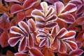 Картинка иней, макро, растение, изморозь