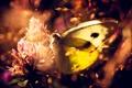 Картинка цветок, бабочка, растения, макро. природа