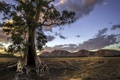 Картинка поле, горы, дерево