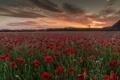 Картинка закат, поле, маки