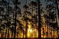 Картинка лес, деревья, закат, Sunrise, Florida