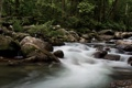 Картинка вода, деревья, камни, берег, листва, мох, поток