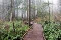Картинка лес, настроение, девочка, прогулка