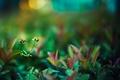 Картинка трава, листья, цветы, природа