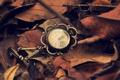Картинка листья, часы, стрелки, цифры