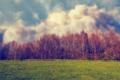 Картинка поле, небо, трава, облака, деревья