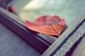 Картинка осень, макро, оранжевый, красный, лист, дерево, доска