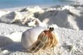 Картинка песок, раковина, краб, прячется, макро