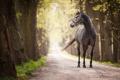 Картинка дорога, фон, конь