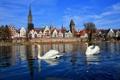 Картинка река, Бавария, дерево, город, дома, лебеди, Германия
