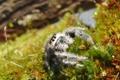 Картинка трава, глаза, паук, смотрит, паучок