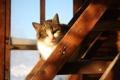 Картинка дом, кошка, деревня
