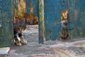 Картинка кошки, фон, забор