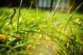Картинка macro, поле, трава
