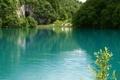 Картинка лес, лето, озеро, фото, скала