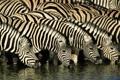 Картинка природа, река, зебра, африка, водопой