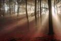 Картинка осень, лес, свет, утро