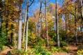 Картинка осень, деревья, природа, фото, США