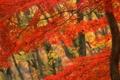 Картинка лес, Осень, рыжие листья