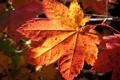 Картинка листья, золото, октябрь, Осень, сентябрь, ноябрь