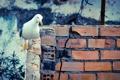 Картинка фон, стена, птица