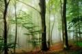 Картинка природа, лес, деревья, туман