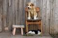 Картинка кошка, собака, друзья