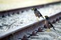 Картинка дорога, птицы, природа